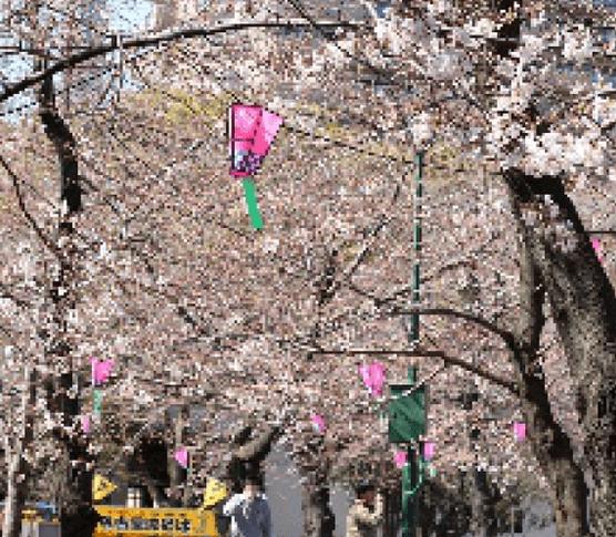 春の鶴舞公園